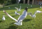 me feeding birds