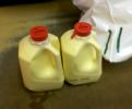 a trip to Calder Dairy